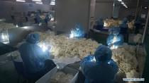 Pekerja Pabrik di China Lembur Demi Sarung Tangan Anticorona