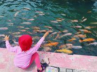 Anak-anak memberi makan ikan di saluran irigasi Bendung Lepen.