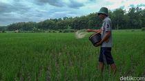 Dinas Pertanian Ponorogo Sebut Pupuk Subsidi Petani Dikurangi 45,20%