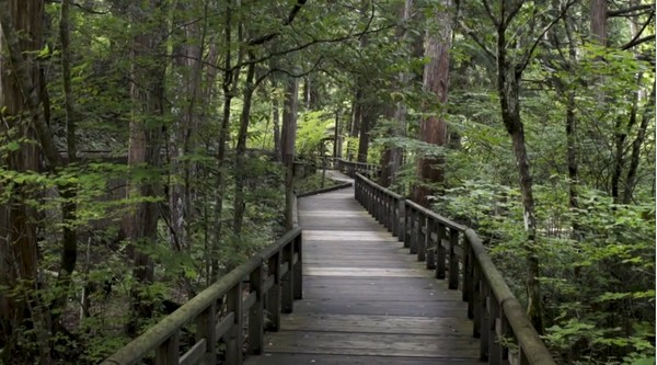 Perlahan penat pun hilang. Berjalan perlahan di tengah hutan menstimulasi indera untuk berdamai dengan diri sendiri. Kicauan burung, gemersik air dan dahan yang bergesekan menjadi tradisi yang membumi. (BBC)