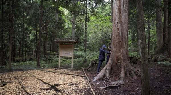 Pohon dipercaya dapat membantu manusia untuk sehat dan bahagia. Banyaknya waktu yang terbuang di dalam ruangan membuat tubuh akan mengalami gangguan defisit alam. Sehingga menghasilkan perasaan negatif tentang kehidupan. (BBC)