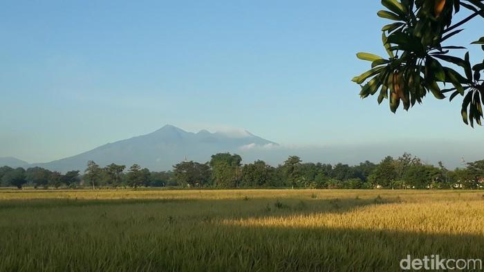 Gunung Arjuno-Welirang dari kejauhan