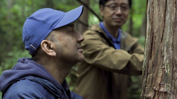 Bukan Jepang kalau tidak unik. Salah satu kegiatan yang biasa dilakukan dalam tradisi Shinrin-yuko adalah berbicara dengan pohon. Berbicara dengan pohon dipercaya bukan hanya bermanfaat bagi yang melakukan, namun juga untuk alam. (BBC)