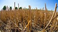 Mungkinkah Melawan Hama Pertanian Tanpa Pestisida?