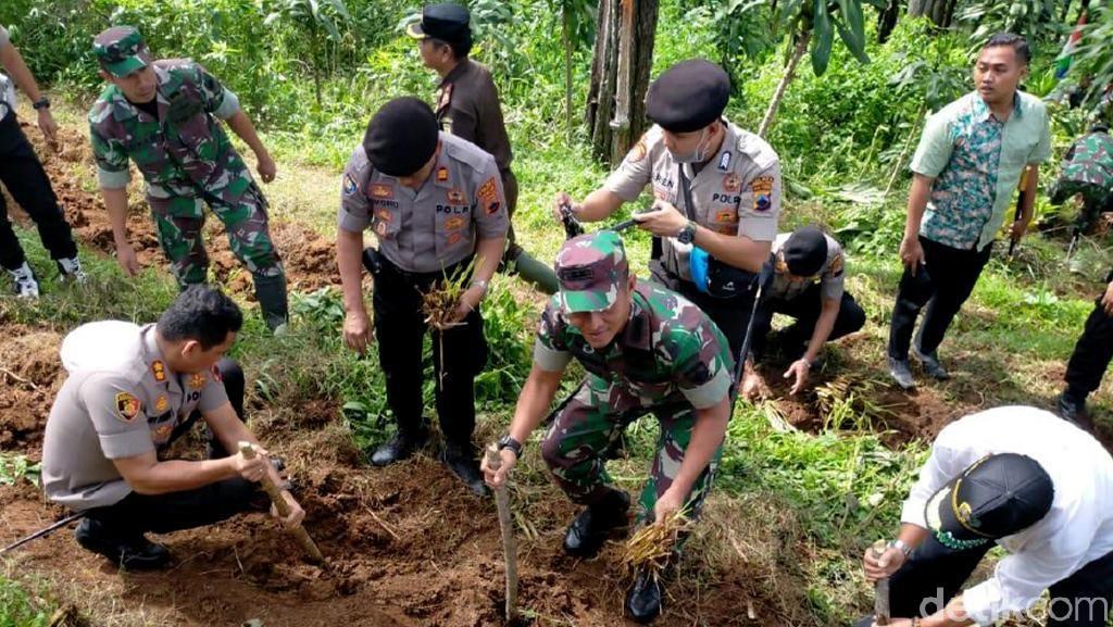 10 Ribu Vetiver Ditanam di Lahan Rawan Longsor Pemalang