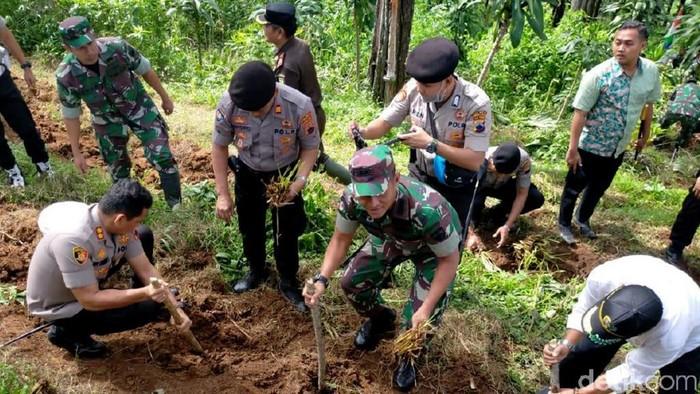 Penanaman 10 ribu vetiver di Bukit Gambangan, Pemalang