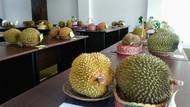 Resep Bikin Durian Mentah Jadi Gulai