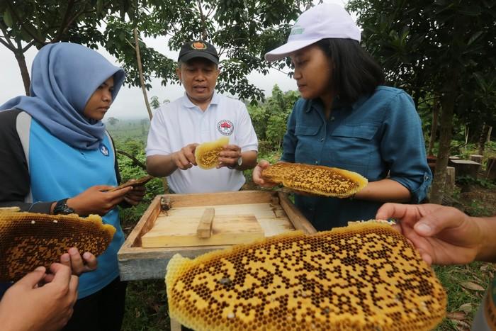 Anak usaha RLU, PT Lestari Asri Jaya (LAJ) dan TNBT menggelar pelatihan budidaya lebah madu sebagai pagar alami untuk melindungi gajah Sumatera, sekaligus meningkatkan kesejahteraan masyarakat.