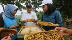Mengintip Budidaya Lebah Langsung dari Alam