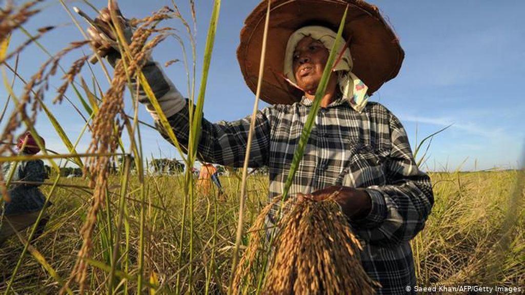 Ekspor Beras Thailand 2020 Diperkirakan Capai Titik Terendah