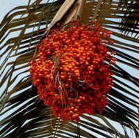 Selain di Papua, Ulat Pohon Jadi Camilan Wajib Turis di Amazon
