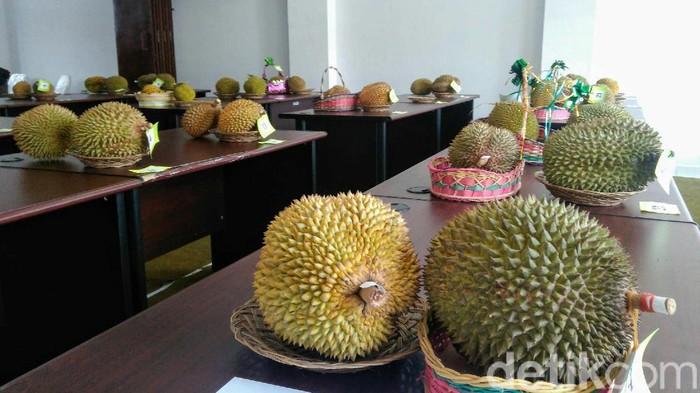 gerebek durian di purworejo