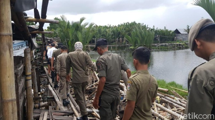 Ribuan Ternak Babi di Makassar Ditertibkan.