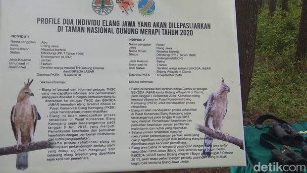 Jokowi Ingin Elang Jawa Makin Banyak Dilepasliarkan di Merapi