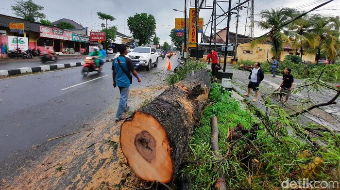 Penampakan pohon tumbang di Sleman: tutup akses jalan Magelang KM 9 dan timpa rumah