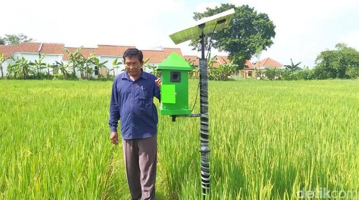 Petani di Kabupaten Madiun membuat alat pengusir tikus menggunakan tenaga surya, yang aman buat manusia. Lalu, bagaimana cara kerja alat tersebut?