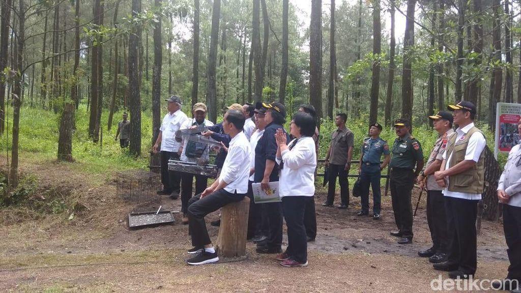 Video Jokowi Lepas Elang Jawa Abu dan Rossy di Kawasan Merapi