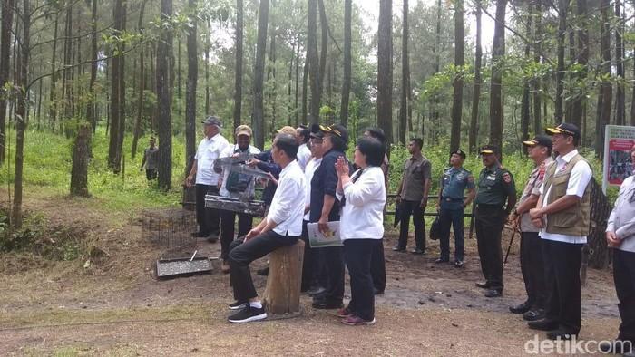 Jokowi melepasliarkan Elang Jawa di kawasan Merapi