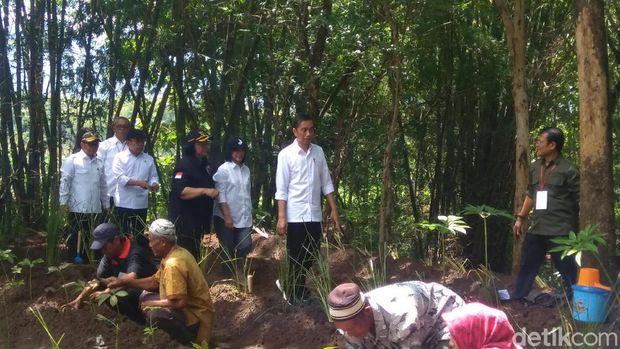Jokowi tanam vetiver hingga porang di hulu Waduk Gajah Mungkur