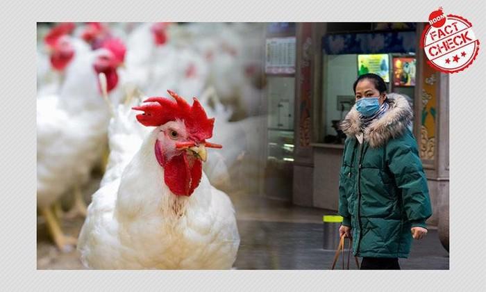 daging ayam bisa menyebarkan virus corona