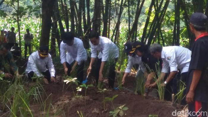 Jokowi tanam vetiver hingga porang di Waduk Gajah Mungkur