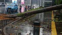 Hujan Deras Guyur Jakarta, Pohon Tumbang di Depan Polda Metro