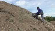 Puluhan Lansia Banting Tulang di Polewali Mandar Jadi Pemecah Batu