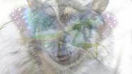 Tes Kepribadian: Gambar Hewan Apa yang Pertama Kamu Lihat?
