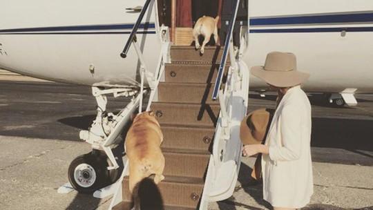 Peliharaan para Selebriti Dunia yang Kerap Ikut di Private Jet