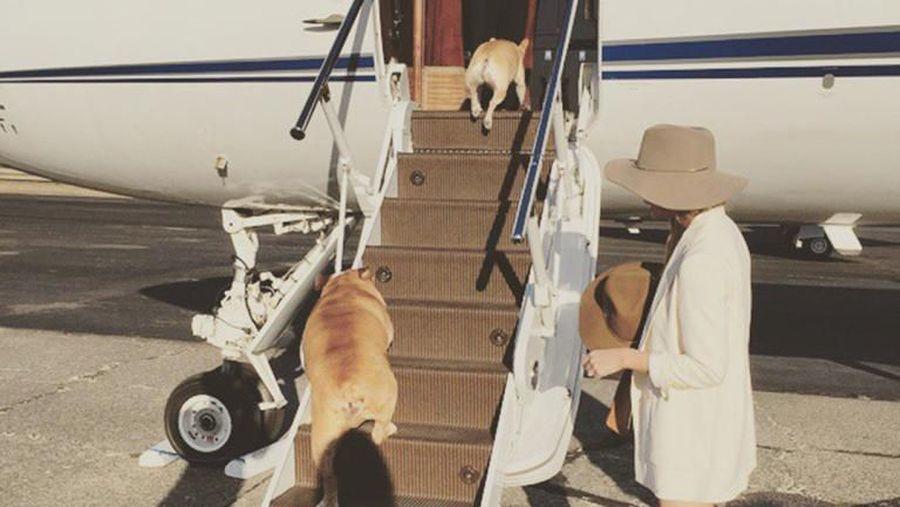Luke, anjing peliharaan Oprah.