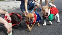 Melihat Gaya Para Anjing yang Bikin Gemas di Karnaval Brasil