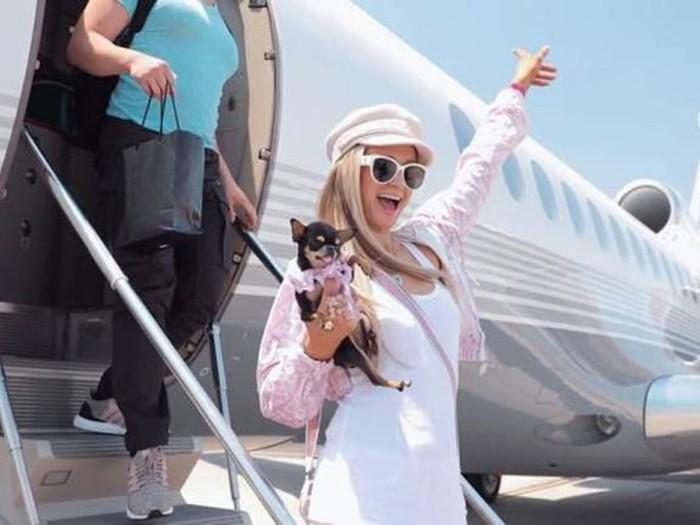Anjing Cihuhua milik Paris Hilton.