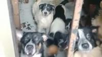 Warga Ngeluh Bising-Bau Kotoran, Ternyata Ada 30 Anjing Dikurung di Depok
