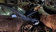 Satu Keluarga Nyaris Tewas Tertimpa Pohon, Diselamatkan Rem Otomatis