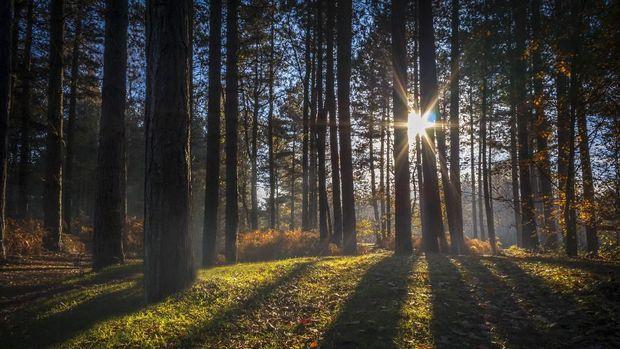 Hutan Sherwood merupakan rumah dari tokoh legenda Inggris, Robin Hood.