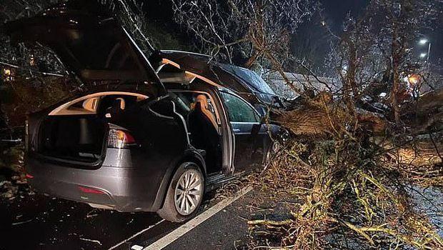 Tesla menghindarkan sebuah keluarga di Inggris dari tertimpa pohon tumbang