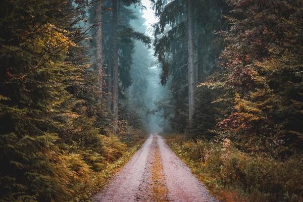 Black forest atau hutan hitam berada di Baden-Wuttenberg, Jerman barat daya. (Photosspeakathousandwords/Istock)