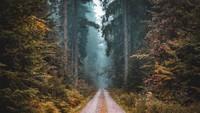 Ini Dia 5 Hutan Paling Instagramable: Malaysia Kelima Indonesia Tidak Ada