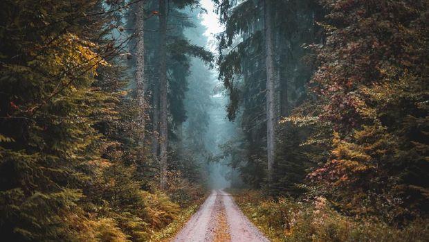 Black Forest atau Hutan Hitam di Baden-Wuerttemberg, Jerman menjadi hutan paling instagramable.