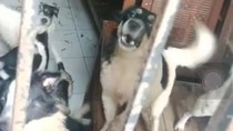 Puluhan Anjing Masih Telantar di Pasir Putih, Depok