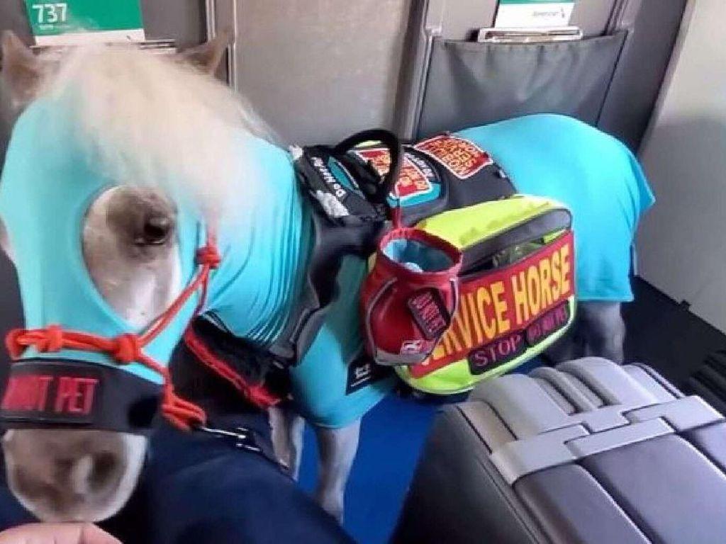 Wanita Pesan Kursi Pesawat Kelas 1 Untuk Kuda Kecilnya