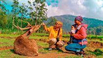 Kampung Cai Ranca Upas, Wisata Ramah Anak di Ciwidey