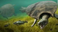 Fosil Kura-kura Raksasa Ditemukan, Panjangnya 4 Meter