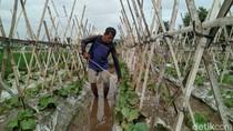 Tanggul Jebol, Petani Melon di Ponorogo Terancam Gagal Panen