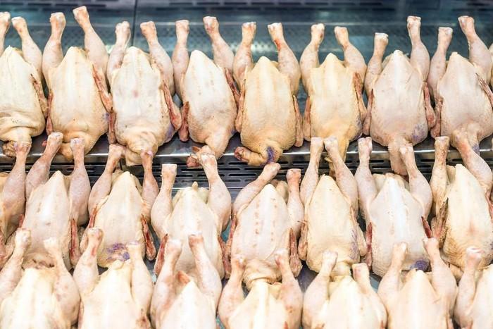 Pencurian Ayam
