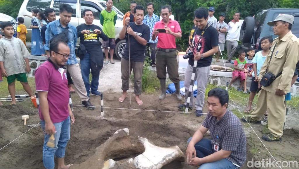 Ekskavasi di Madiun Temukan Fosil Panggul Gajah Purba