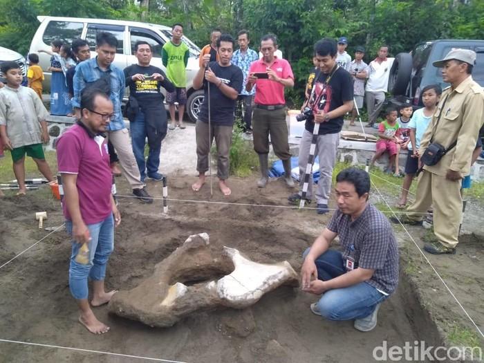 Balai Pelestarian Cagar Budaya (BPCB) Jatim mengekskavasi fosil hewan purba di Kabupaten Madiun. Ekskavasi dilakukan bersama Balai Pelestarian Situs Manusia Purba (BPSMP) Jawa Tengah.