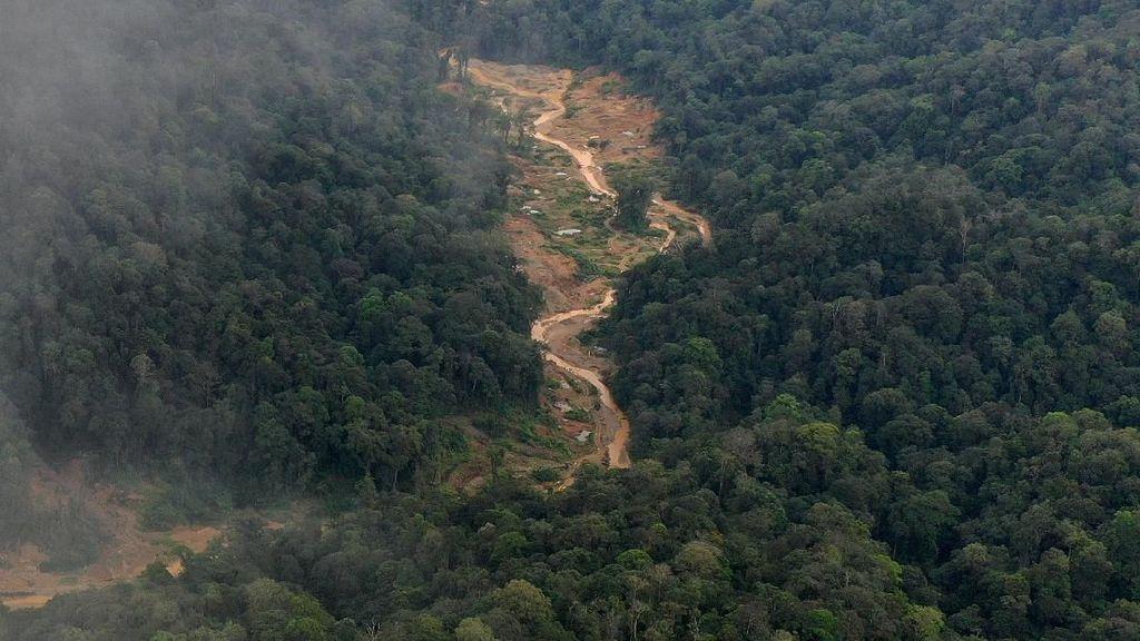 Hutan Lindung Dapat Jadi Food Estate, Komisi IV: Harusnya Tidak Boleh