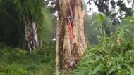Heboh Pohon Terbakar Misterius di Makam Pemalang, Apa Sebabnya?