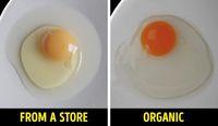 Cara Mudah Cek Kualitas Makanan, Telur hingga Pisang